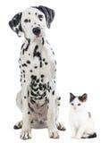 黑白在白色隔绝的猫和狗 库存照片