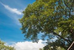 白天树 库存照片
