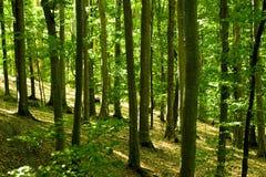 白天森林 免版税库存图片