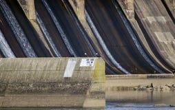 白头鹰在Conowingo水坝的电子塔栖息在萨斯奎哈那河,马里兰,美国 图库摄影