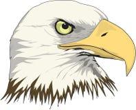 白头鹰头例证 向量例证