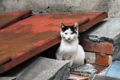 黑白小猫 免版税库存图片