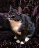 黑白小猫 库存照片