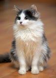 黑白幼小猫 免版税图库摄影