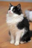 黑白幼小猫 免版税库存图片