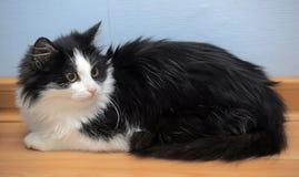 黑白幼小猫 库存图片