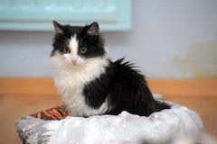 黑白幼小猫 库存照片