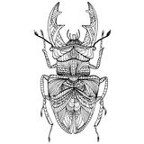 黑白手拉的zentangle风格化臭虫 免版税库存照片