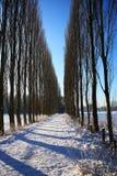 白扬树胡同在冬天 免版税库存照片