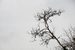 黑白抽象死的树枝形状样式 免版税图库摄影