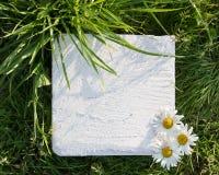 白方块与三棵春黄菊的石头块在绿草 库存图片