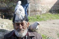 白有胡子的友好祖父和的鸽子 免版税库存照片