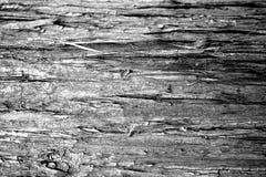 黑白木水平的纹理背景—水杉树皮 免版税库存照片