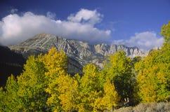 白杨木五颜六色的内华达山脉 免版税库存图片