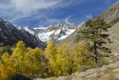 白杨木五颜六色的山内华达山脉 免版税库存照片