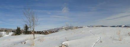 白杨木全景冬天 库存图片