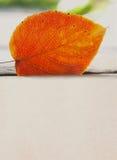 白杨木叶子桔子 纹理和样式特写镜头 复制空间设计海报 库存图片