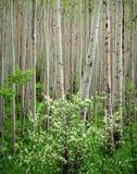白杨木响铃山茱萸树丛褐紫红色原野 库存图片