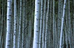 白杨木岩石树丛的山 图库摄影