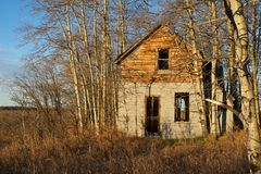 白杨木的被放弃的老房子 免版税库存图片