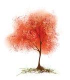 白杨木红色 图库摄影