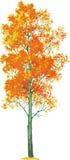 白杨木结构树向量 库存例证