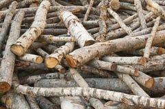 白杨木被堆积的日志 免版税图库摄影