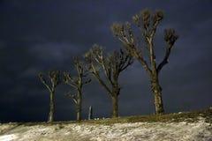白杨树在冬天夜 免版税库存图片