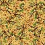 白杨树巨大的叶子无缝的背景样式纹理  库存图片