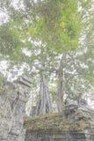 白杨树根 库存图片