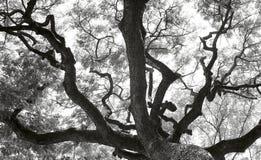 黑白树剪影 免版税库存图片