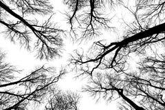 黑白树剪影 免版税库存照片