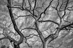 黑白树干 免版税库存图片