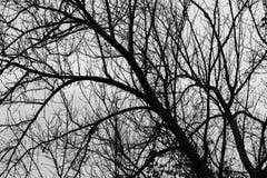 黑白树枝抽象背景 免版税库存图片