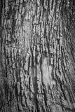 黑白树皮纹理 免版税库存图片