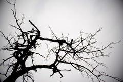 黑白树 免版税图库摄影