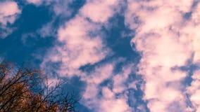 白桃红色云彩和树枝没有叶子 免版税库存图片