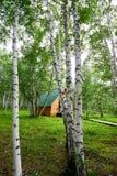 白桦树和房子 库存图片