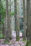 白桦树在阳光下 免版税库存图片