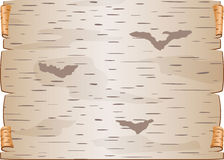 白桦树皮片断扭转了并且塞书信的空白裂缝 库存照片