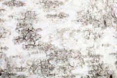 白桦树皮的纹理,模糊在边缘附近 库存照片