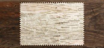 白桦树皮纹理树空白 免版税库存照片