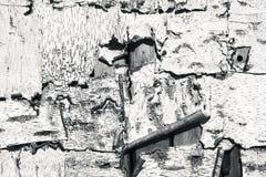 白桦树皮纹理 图库摄影