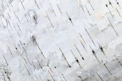 白桦树皮背景纹理 免版税库存照片