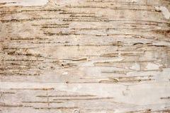 白桦树皮背景 库存图片
