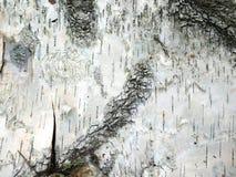 白桦树皮背景 图库摄影