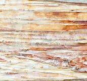 白桦树皮 库存图片