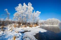 白桦树霜  库存图片