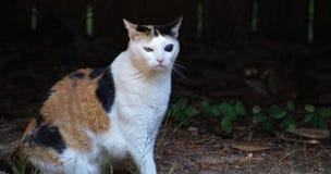 白棉布与我的猫don't混乱 免版税图库摄影