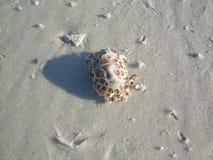 白棉布在白色沙子的蟹盒 免版税库存图片